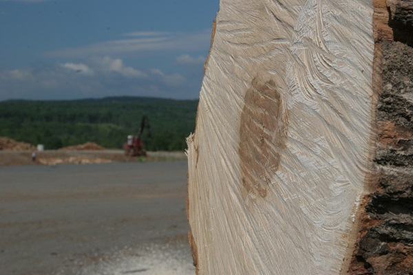 up-close photo of sawed end of a tree in lumber yard